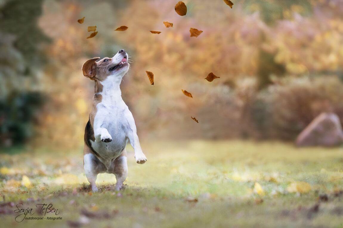 Tierfotografie von Outdoorpixl Teßen