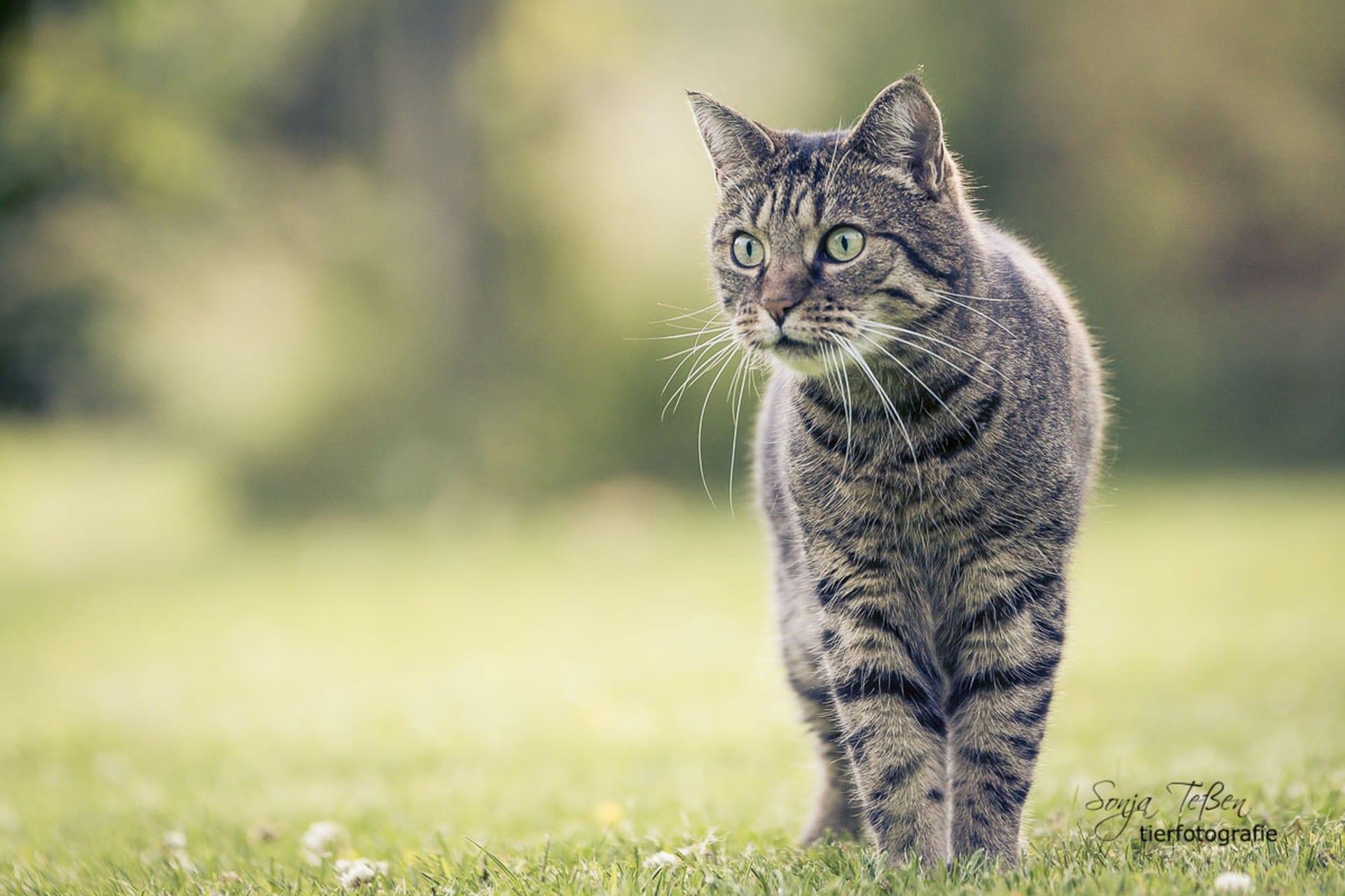 914-Outdoorpixl-Teßen---Tierfotografie-Tierfotos-fcLQ44Rd