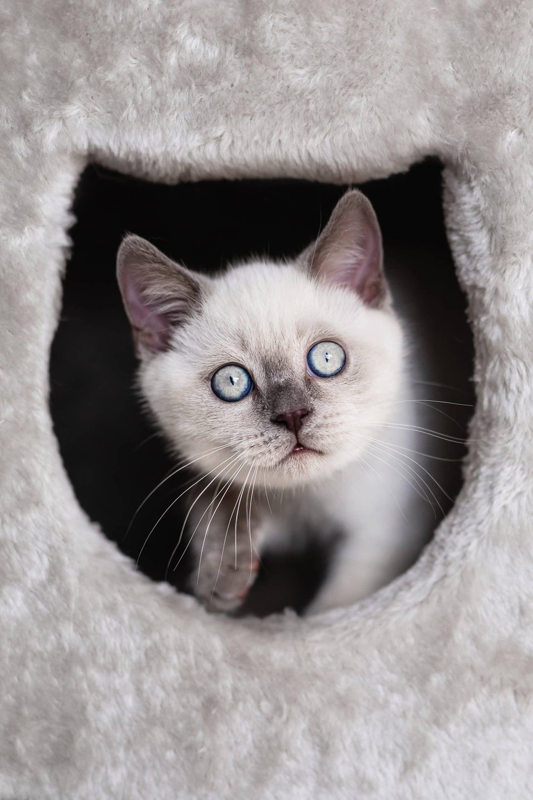 Katzenfoto-von-Jennifer-Raßmann-Photo-&-Design